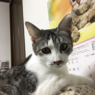 6.14予約制藤井寺保護猫譲渡会参加猫テラ♂キジ白