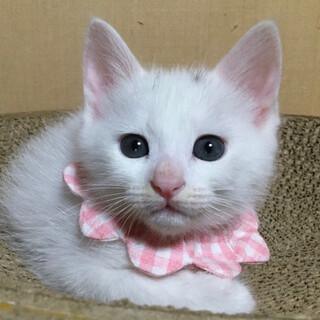 白いボディにつぶらな瞳が魅惑的、ひかるです!