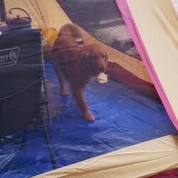 「てんちゃんとテント」サムネイル1