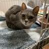 『しきぶ』寝てるだけのおばあちゃん猫 サムネイル6