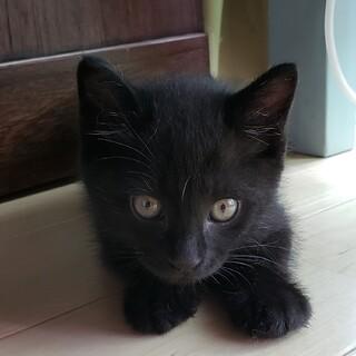 少しビビり でも可愛い黒猫男の子