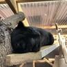 穏やかで大人しい黒猫