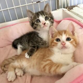 エールちゃんとホームとステイ子猫たち