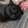 可愛く鳴くメス黒猫ちゃん★