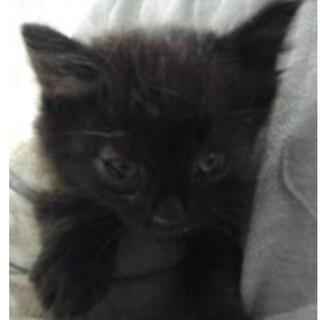 里親様に迎えられました。子猫♀052