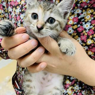 とても可愛いキジ子猫ロールちゃん