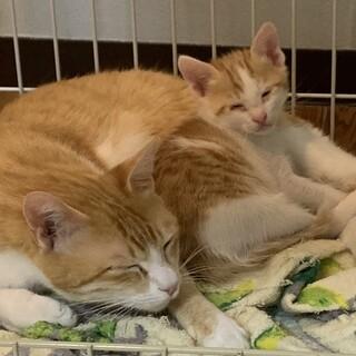 ☆生後2ヶ月の息子とママ猫親子で募集☆