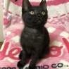 ママが必死で守り抜いた子猫さん スモークタビー サムネイル3
