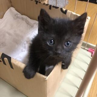 ママが必死で守り抜いた子猫さん スモークタビー