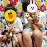 【2匹一緒に】カナロくん♡3ヶ月~3ヶ月半 サムネイル6