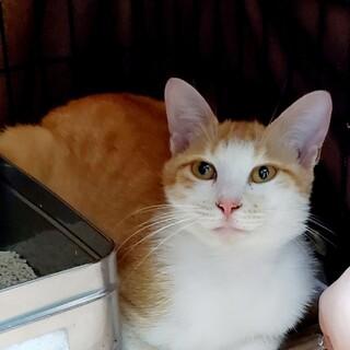 処分間近 母猫だけ残されました 動画あり