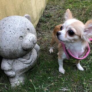 海里ちゃん チワワ 4歳 女の子