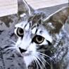 甘えん坊のオス猫ちゃん