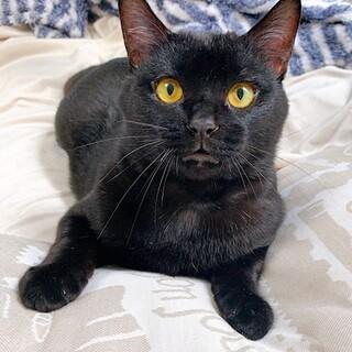 慎重派な黒猫、弥生くんです