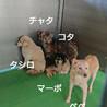 犬舎③野犬のタシロ君/白垂耳♂ サムネイル2