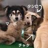 犬舎③野犬のタシロ君/白垂耳♂ サムネイル3