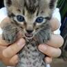 可愛い子猫です❣️里親募集中!