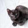 黒子猫 ピカソ君 里親様募集