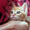 生後約1か月★兄弟猫②