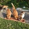サポートをしている公園猫たち…