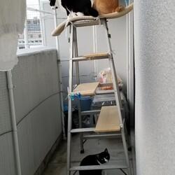 脚立が猫のキャットタワーに