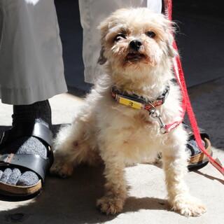 譲渡対象犬の紹介です 525-3