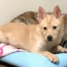 mix♀ 子犬の「ラミーちゃん」 サムネイル7