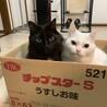 成猫2匹の募集です。ワクチン、去勢手術済みです。