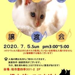 7/5(日)柏市DE保護猫譲渡会