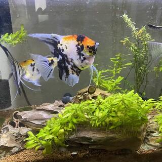 熱帯魚数種類