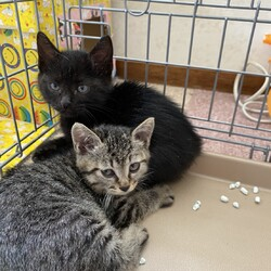 お母さん猫3匹から子猫ちゃん14匹