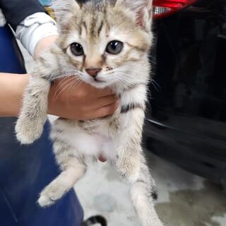 4月20日生まれの可愛い子猫ちゃん