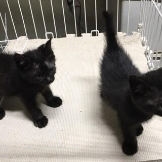 生後2カ月半、子猫の家族募集中!!