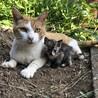 トライアル中 募集一時停止 可愛いサビ猫 ♀ サムネイル5