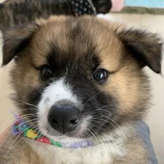 生後約2、3か月 モフモフの人慣れした子犬 オス
