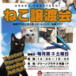 6/20 子猫譲渡会のお知らせ(事前予約制)