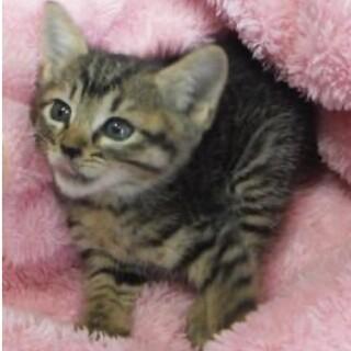 里親様に迎えられました。子猫♀058