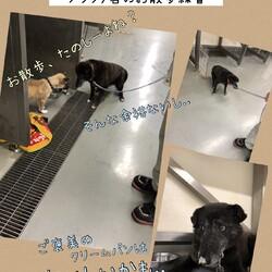 「2020年6月12日、倉敷のおだやかな犬舎」サムネイル3
