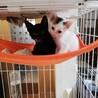 子猫 白黒きょうだい