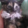 ママが大好き〜大人しいサビ猫サリーちゃん