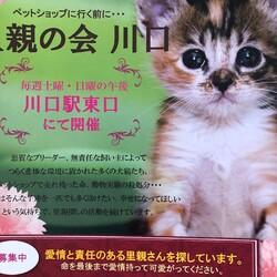 里親の会 川口 猫の譲渡会(毎週開催) サムネイル1