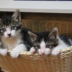 ゆったりほっこりする猫のお見合い会 サムネイル2