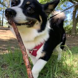 木の枝がおもちゃ