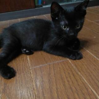 黒猫ネロ君