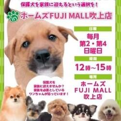 ワンちゃん譲渡会inホームズFUJI MALL 吹上店