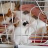 1ヶ月過ぎの可愛い子猫とお母さん猫