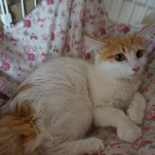 美しい母猫ちびちゃん、医療済