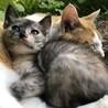 トライアル中 募集一時停止 可愛いサビ猫 ♀ サムネイル6