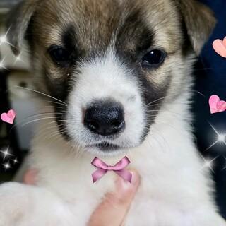 20-M416 可愛い赤ちゃん犬です。