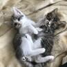 可愛い兄妹 ネオ君&リコちゃん 2ヶ月